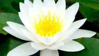 Zen Music, Relaxing Music, Calming Music, Stress Relief Music, Peaceful Music, Relax, ☯2242