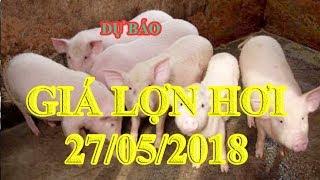 Dự báo giá lợn hơi 27/5/2018   Giá lợn hơi 27/5/2018   Tin Tức 24h