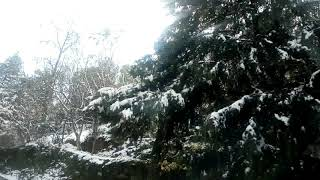 Snow fall Joshimath