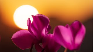 Relaxing Music for Meditation - Soothing Music for Stress Relief, Study, Spa, Massage (Amaya) - YouTube