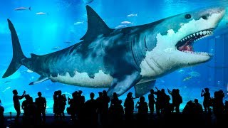 10 Biggest Sharks Ever Existed on Earth (Meg Isn't Only the Biggest!)