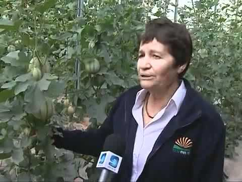 Инновационные израильские технологии в овощеводстве
