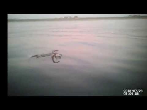rykliu zvejyba