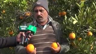 Khanpuri Malta (orange ) Famous in Pakistan