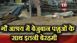 So ruthlessly with wild animals in cow shelter in Bahraich