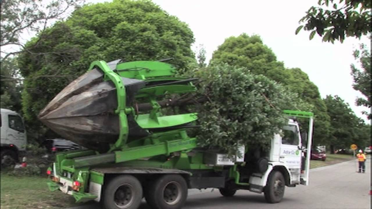 Clyde Road Upgrade Tree Relocation Youtube