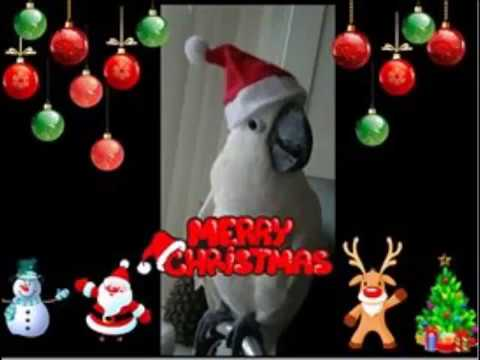 Merry Christmas Everyone !!