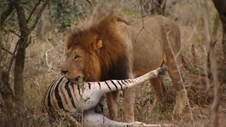 lions-documentary-the-kings-of-the-african-jungle.jpg
