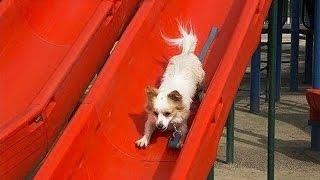 Puppies on Slides Compilation (2013)