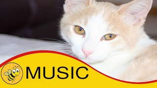 Happy Funny Children's Music: Fun Music Dogs & PC The Cat.
