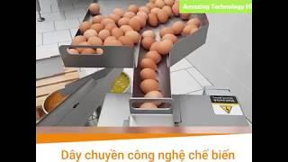 Dây chuyền công nghệ chế biến trứng gà hiện đại