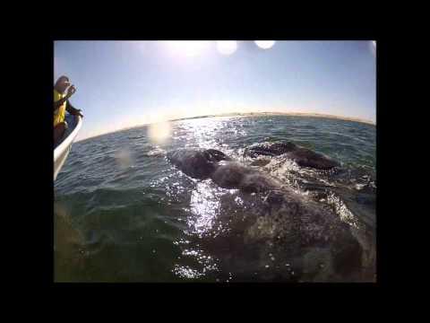 Hi Momma Whale!!