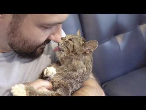 Clean, Cuddle and Crash with Lil BUB