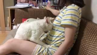 猫と女 5年前から変わらず