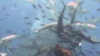 サメに餌付け10
