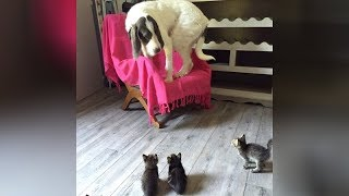 OLD CATS & DOGS can be SUPER FUNNY TOO! - TRY NOT TO LAUGH