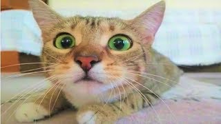 Top 500 Highlights of Animals - VERY FUNNY ANIMALS COMPILATION