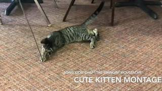 *contains flashing images* Cute Kitten Montage   That's it.  That's the Whole Video.