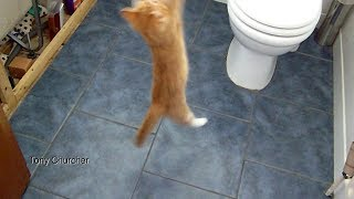 Kitten cat trying to catch a fly. Running and jumping to get it.