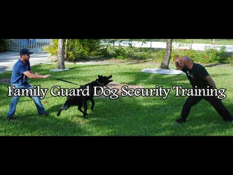 Trained Family Guard Dogs for Sale