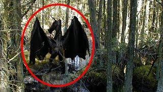 5 Con rồng bị bắt gặp trên máy ảnh và phát hiện ra trong cuộc sống thực!