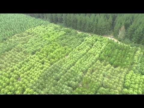 Cypress Block UAV Flyover