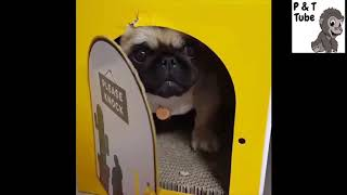 Funny Pets Fails 2019  Pets Compilation 2019   hilarious cats reactions!! OMG   720p Hd