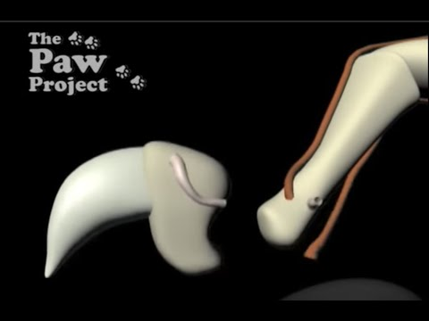 Pros And Cons Of Laser Declawing Cats - Declaw Surgery Education