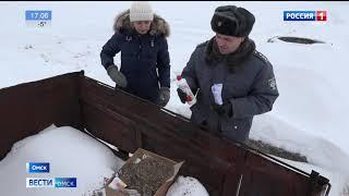 Специалисты регионального Управления Россельхознадзора обнаружили в семенах цинии опасный сорняк
