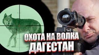 Охота на волка в Дагестане 2020