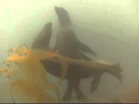 Malibu Divers Goes to Santa Barbara Island