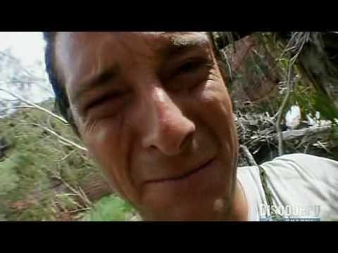 Bear Grylls Eats Live Spider Youtube