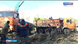 На месте бывших трамвайных путей в Советском округе появились две сотни шаровидных ив