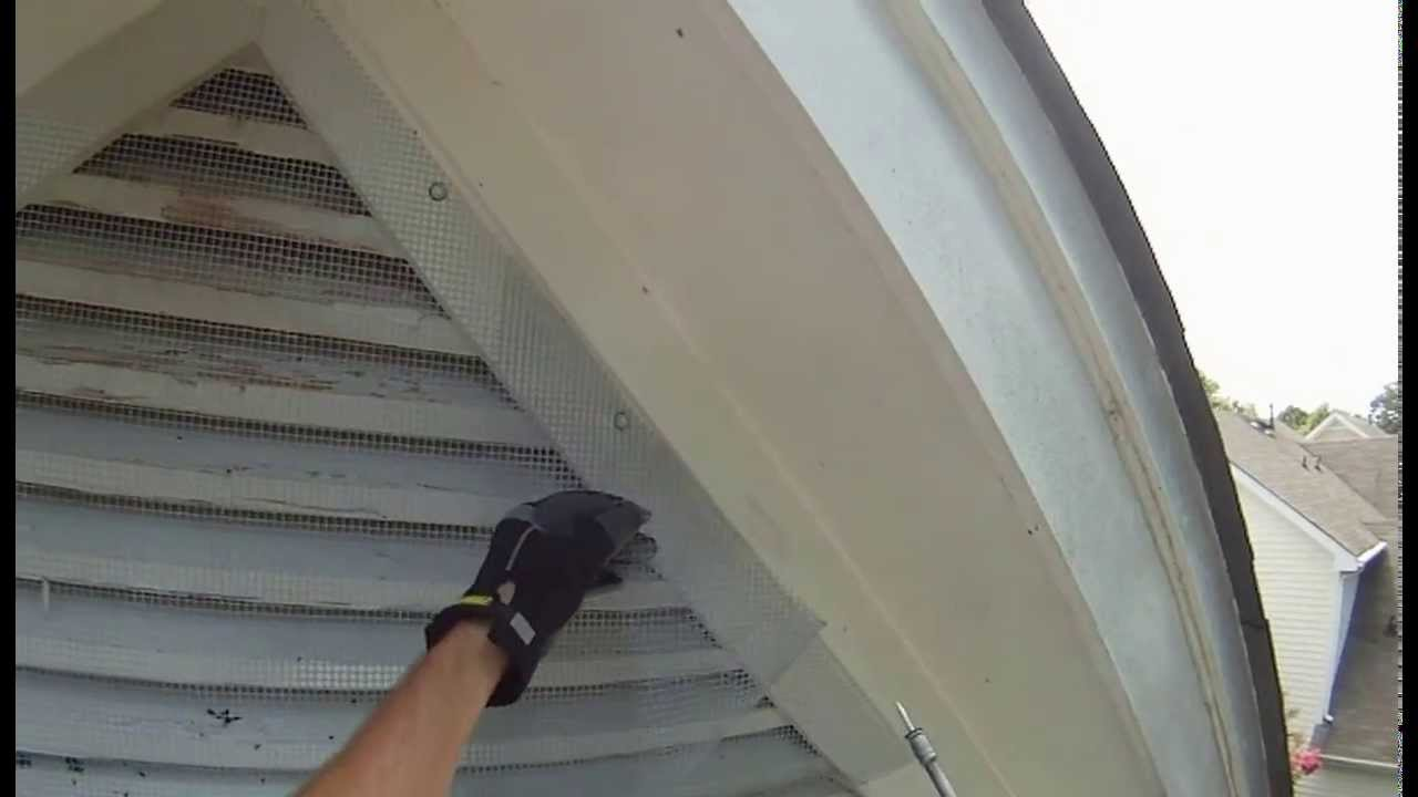 Bat Removal Using One Way Door Charlotte Nc Youtube