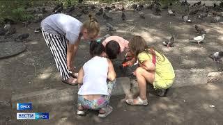 Кормовые тараканы устроили колонию в одном из районов города