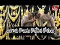 Monkeys snatch gold chains from VRO's house in Telangana