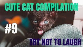 Cute cat compilation try not to laugh #9