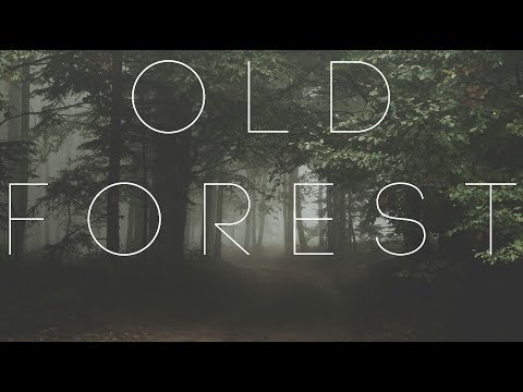 Old Forest | Beautiful Chillstep Mix
