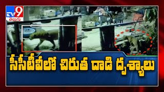 Leopard attacked dog, CCTV footage goes viral..