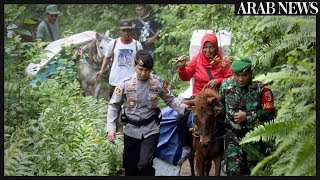 Indonesia uses horses to transport election logistics