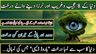 8 Most Amazing Trees In the World In Urdu Hindi