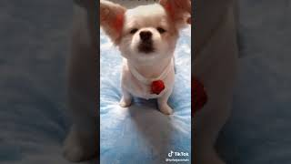 Cute dog feel good while doing this