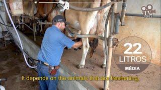 Sítio Aliança Jersey – Pequena propriedade familiar que produz leite e queijos com rebanho Jersey