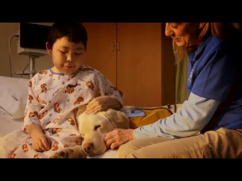 Alaska Regional Hospital Pet Therapy - Brand New Day