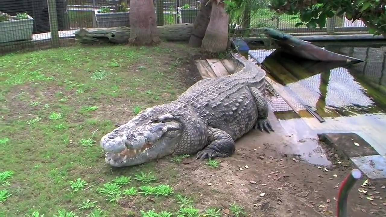 Alligator Adventure In North Myrtle Beach Youtube