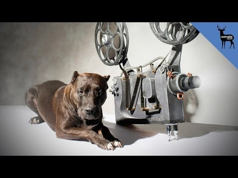 Animals Were Harmed In The Making Of These Films - Smashpipe Film