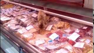 В аэропорту  Владивостока кот съел деликатесов на 60 тыс.руб