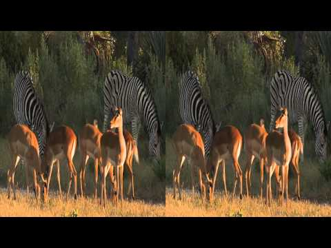 3net African Wild Okavango 3D Promo Video
