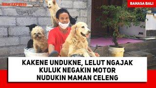 Kakene Undukne, Lelut Ngajak Kuluk Negakin Motor Nudukin Maman Celeng