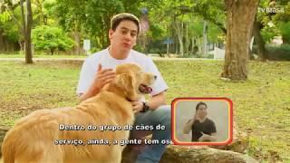 Programa Especial apresenta os Cães de Assistência